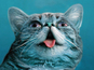 Vice launches 'Lil Bub & Friendz' online