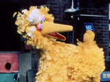 Sesame Street's Big Bird