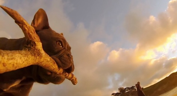 GoPro 'Chicken the dog'