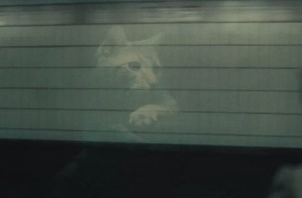 The cat in Inside Llewyn Davis