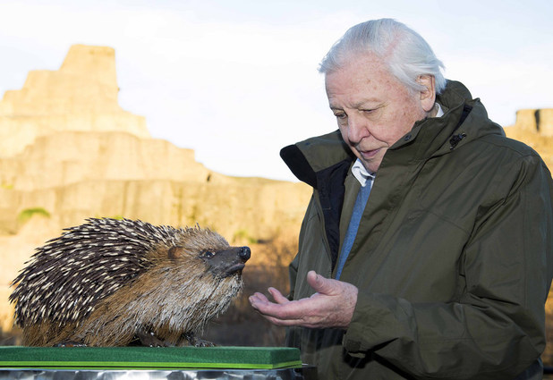Giant hedgehog for David Attenborough's Natural Curiosities