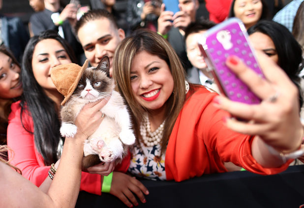 Grumpy cat at the 2014 MTV Movie Awards