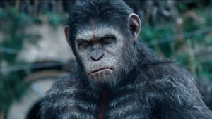 Dawn of the Planet of the Apes Digital Spy exclusive clip