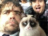 Peter Dinklage didn't meet Grumpy Cat