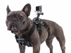 Dog's-eye view - GoPro Fetch lets your dog make its own action videos