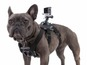 GoPro Fetch gives dog's-eye view