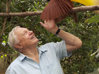 Sir David Attenborough back with new Natural Curiosities series