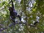 See chimpanzees in Tanzania on Google Maps