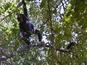 See chimpanzees in Tanzania on Google Maps