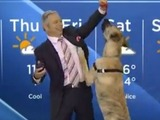 Dog causes chaos during Canadian weather report