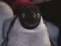 Monty the Penguin goes Geordie in new spoof