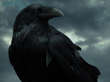 Game of Thrones season 5 promotional website
