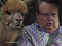 Modern Family's mid-season return features fierce fights and a camel.