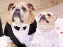 The 'All of Me' singer serenades Puddy and Pippa during the paw-fect wedding.
