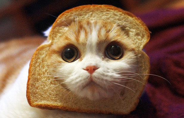 Cat With A Bottle Of Wine And Bread. Stock Photo - Image ...  |Cat French Bread